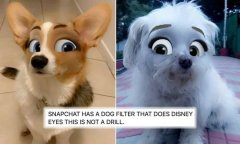 Snapchat turns dogs into cute Disney characters-visa-news-rospersonal-Mikhaylov-Evgeny-Matveevich-Immigration-Agent-Moscow.jpg