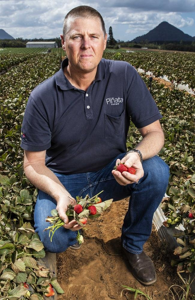 Strawberry grower Gavin Scurr has spoken out about the lack of available pickers-visa-news-rospersonal-Mikhaylov-Evgeny-Matveevich-Immigration-Agent-Moscow.jpeg