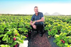 Strawberry fields forever-Strawberry grower Gavin Scurr has spoken out about the lack of available pickers-visa-news-rospersonal-Mikhaylov-Evgeny-Matveevich-Immigration-Agent-Moscow.jpg