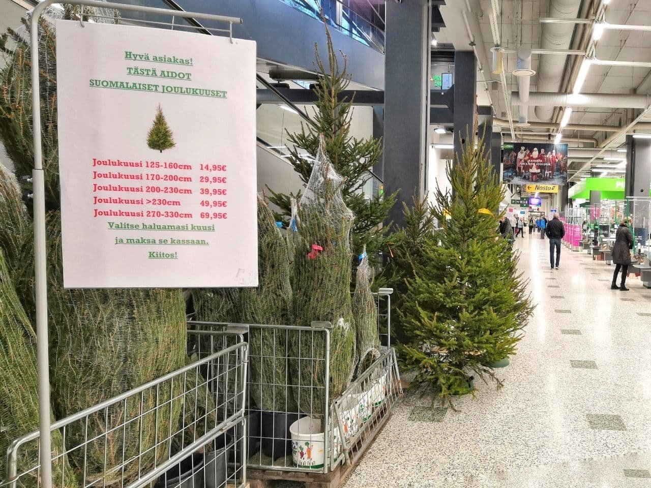 large.146086034_Christmas-trees-Finland-