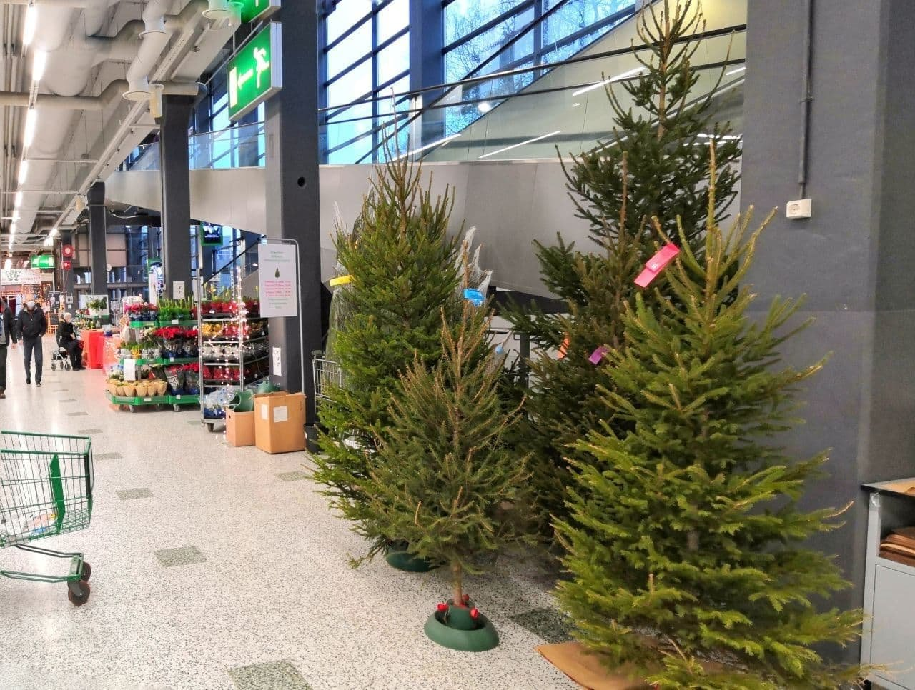 large.Christmas-trees-Finland-visa-news-