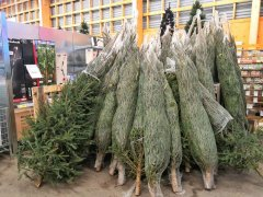 Christmas-trees-Finland-visa-news-rospersonal-Mikhaylov-Evgeny-Matveevich-Immigration-Agent-Moscow 3.jpg