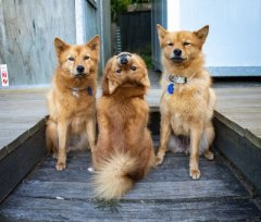 dog from New Zealand makes funny faces-visa-news-rospersonal-Mikhaylov-Evgeny-Matveevich-Immigration-Agent-Moscow.jpg