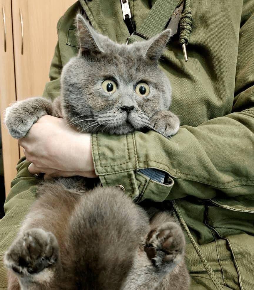 Удивленный кот из Ростовской области набирает популярность в зарубежных СМИ и соцсетях 3.jpg