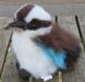 kookaburra beanie